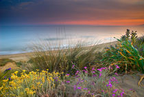 Purple and yellow flowers at the sea by Guido Montañes