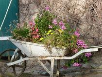 Blumeninsel by Corinna Schumann