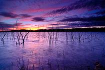 Purple waters von Guido Montañes