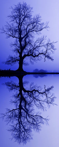 Tree-skeleton-reflection