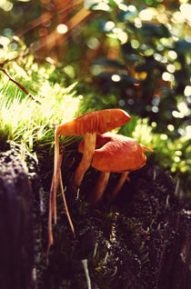 Forest mushrooms von Lina Shidlovskaya