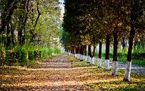 Autumn in Park von olgasart