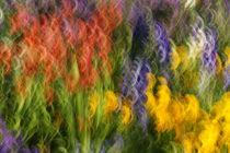 Blumenmeer von keitzl-graphik