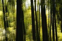 Herbstbäume 5 von keitzl-graphik