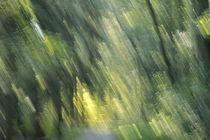 Herbstbäume 3 von keitzl-graphik