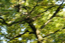 Herbstbäume 2 von keitzl-graphik