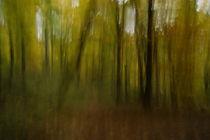 Herbstbäume 4 von keitzl-graphik