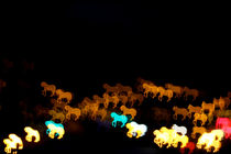 Horse bokeh at night by Dan Davidson
