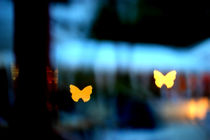 beautiful butterfly bokeh von Dan Davidson