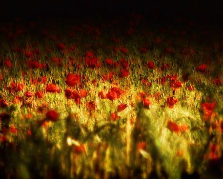 Sea-of-red-large-jpg