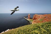 Helgoland von photoart-hartmann