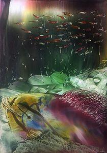 Schönheit der Unterwasserwelt  by Ulrike Kröll