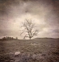 tree under the rain by Guido Montañes