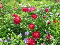 Blumenwiese von Thomas Brandt