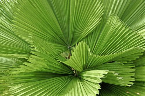 Palmenblatt-hdr-2-dot-jpg