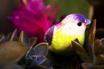 Bird and Nature von Nelson Jaramillo Vasquez