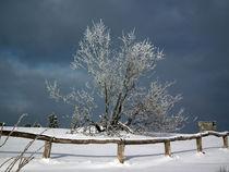 Vereister Baum von Thomas Brandt