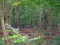 Wald von Thomas Brandt