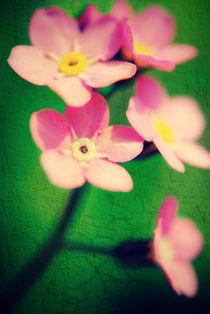 Forget-Me-Not  Pink. von rosanna zavanaiu
