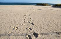Deine Spuren im Sand von Thomas Brandt