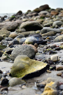 Ostseestrand von Thomas Brandt
