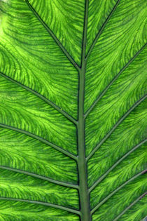 Palmenblatt von Thomas Brandt