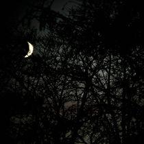 Dark woods von Lars Hallstrom