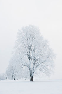Winter stillness by Lars Hallstrom