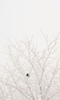 Winter bird by Lars Hallstrom