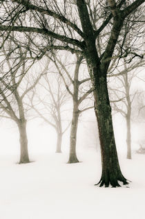 A foggy winter's day by Lars Hallstrom