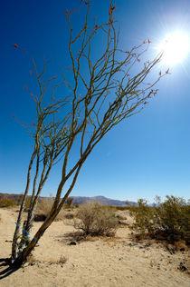 Desert-noon