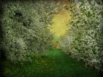 Kirschblüten Zeit  by Elke Balzen