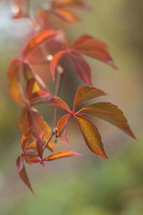 Herbstrauschen von Anne-Barbara Bernhard