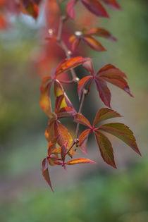 Herbstfarben von Anne-Barbara Bernhard