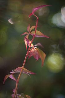 Herbst  von Anne-Barbara Bernhard