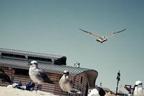 Seagulls V von Marcus Kaspar