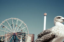 Seagulls III von Marcus Kaspar