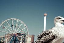 Seagulls III by Marcus Kaspar
