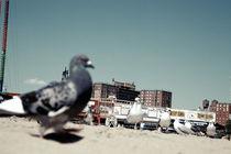 Seagulls I von Marcus Kaspar