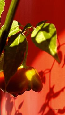 Glocken Chili 1 by badauarts
