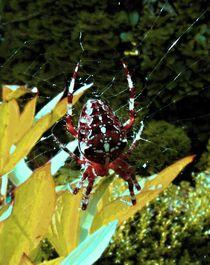 Spinne im Netz 2 by badauarts