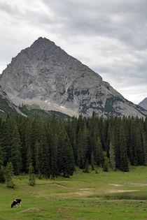 Gipfel von Jens Berger