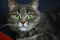 Katze by natalie-bergschwinger