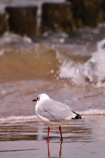 Möwe am Strand by Mandy Siemon