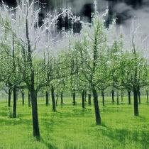 Magic Squares – 4 Seasons - Spring von Ursula Fleiß