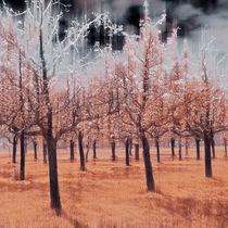 Magic Squares – 4 Seasons - Autumn von Ursula Fleiß