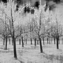 Magic Squares – 4 Seasons - Winter by Ursula Fleiß