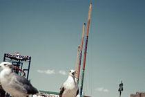 Seagulls II by Marcus Kaspar