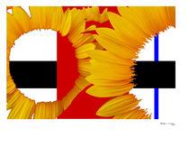 Piet's Sunflowers von xoanxo