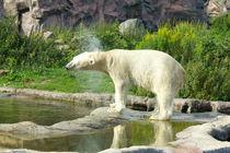 Eisbär by Michaela Rau